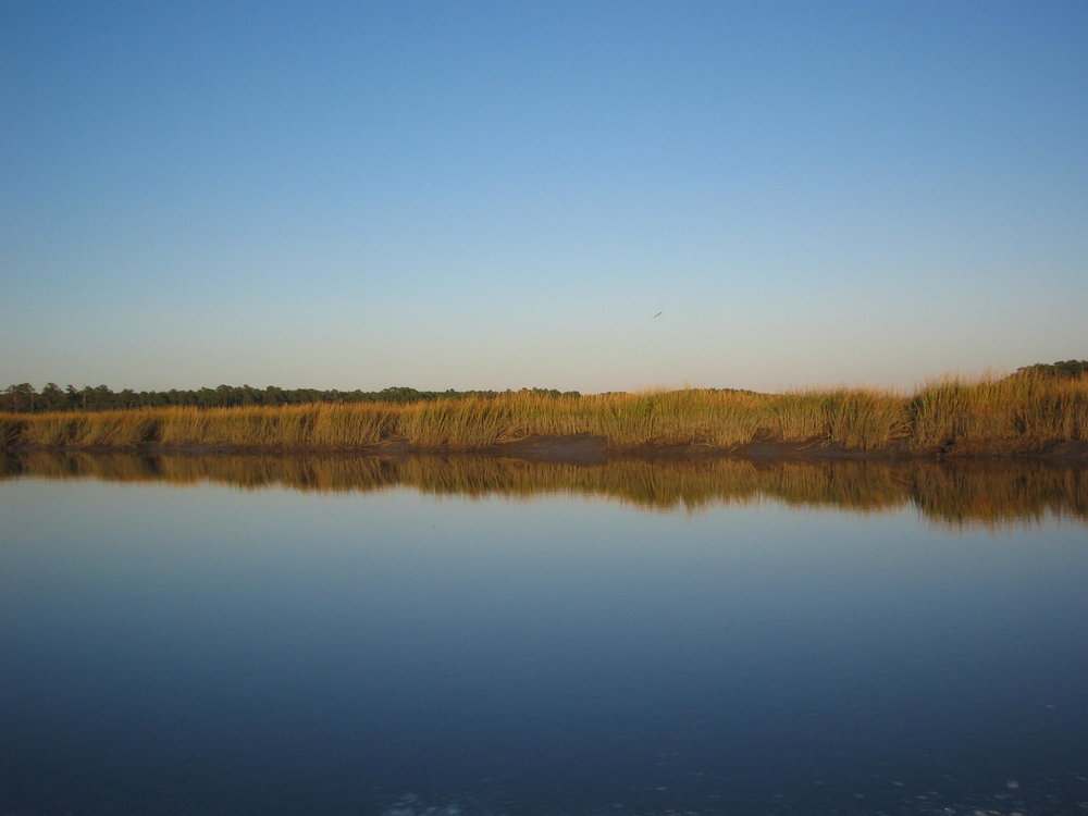 Marsh grass reflection.JPG