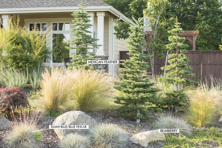Ornamental Grasses Colorado Planning for an ornamental garden ornamental grasses 3 irrigation in areas with constant rainfall bedded plants will not need watering except during periods of drought grasses native to an area workwithnaturefo
