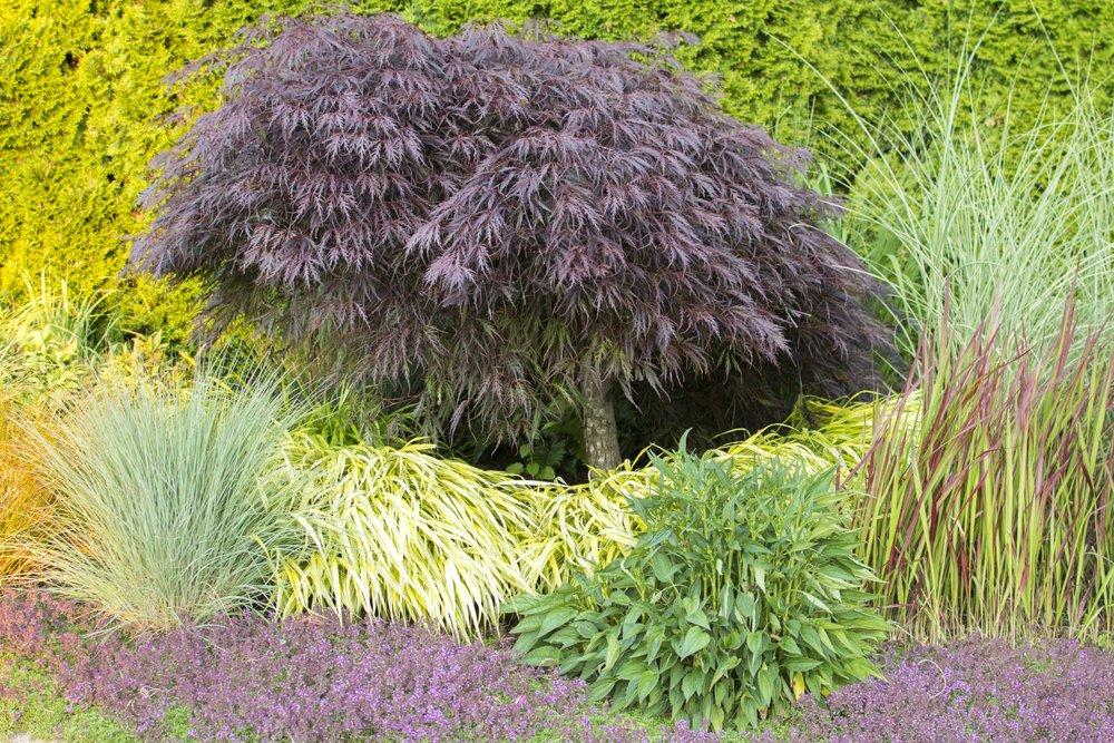 4498 grass garden.jpg