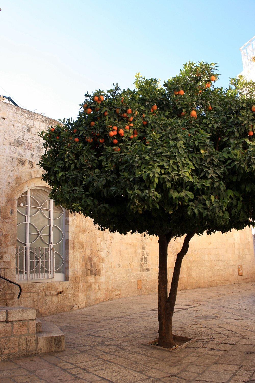 Jerusalem Old City tree.jpg