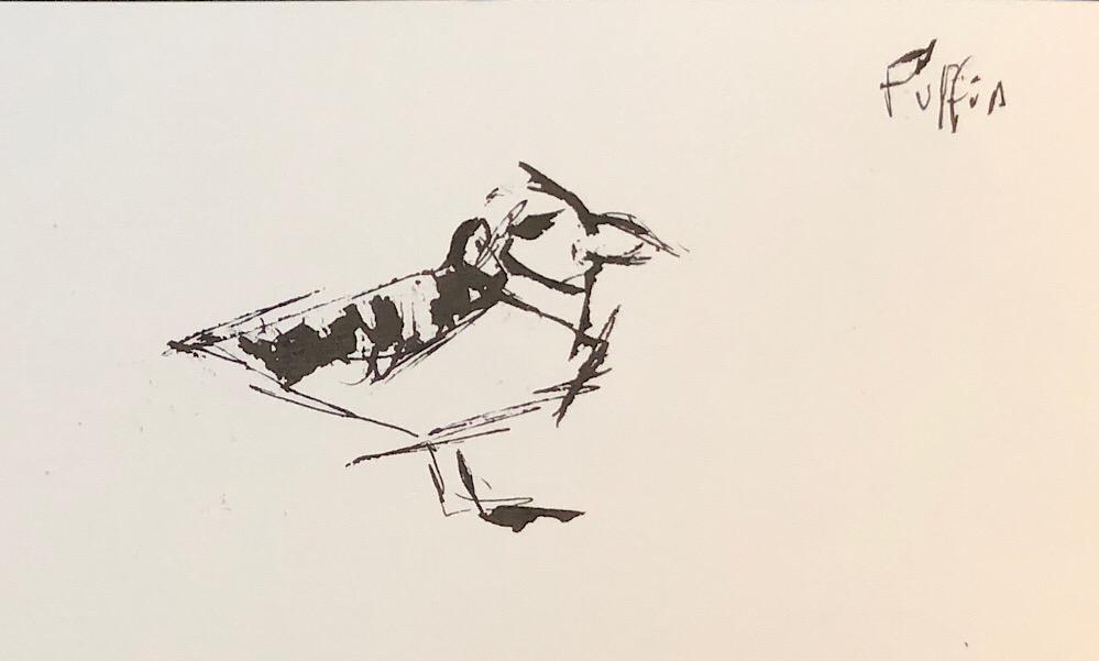 """Geoff Watson, """"Puffin,"""" ink on paper, 5"""" x 8,"""" 2018."""