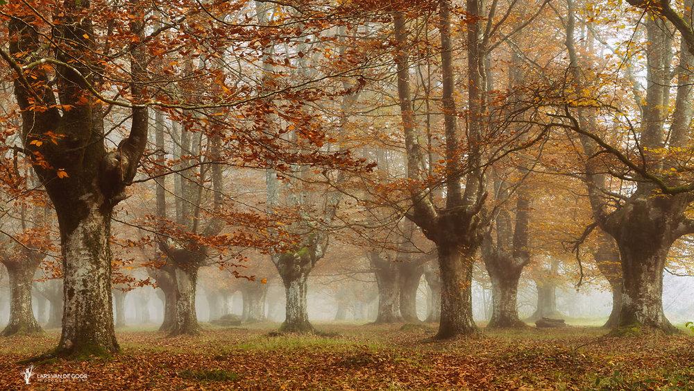 misty pan.jpg