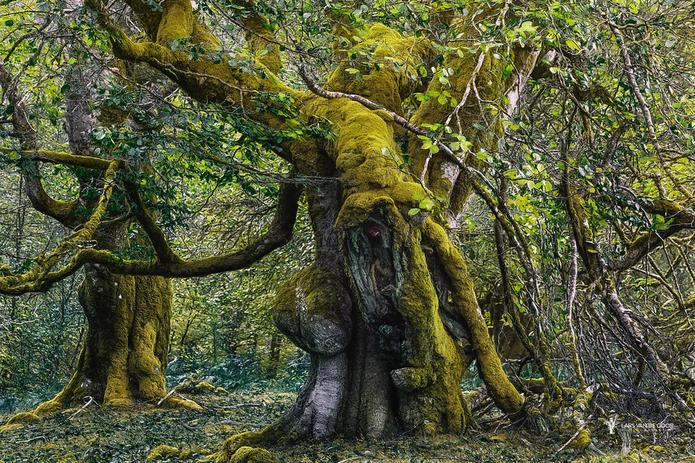 meeting with the ents (2).jpg
