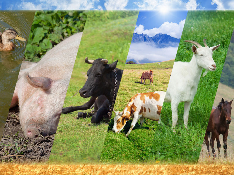 Wide Range Of Agri Feeds