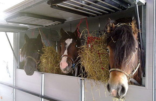 horse floats angle loader traveller range horse floats trailers