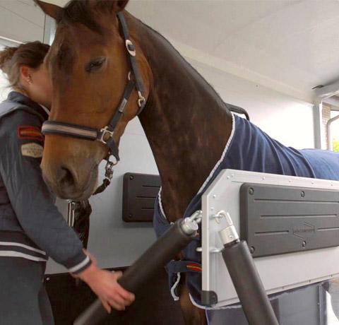 Boeckmann Portax E horse.jpg