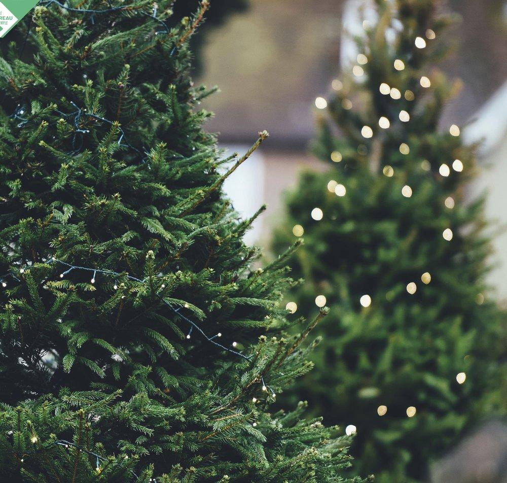 La jardinerie Truffaut - La jardinerie Truffaut Boulogne proposera une vente de sapins et de décorations de Noël !www.truffaut.com