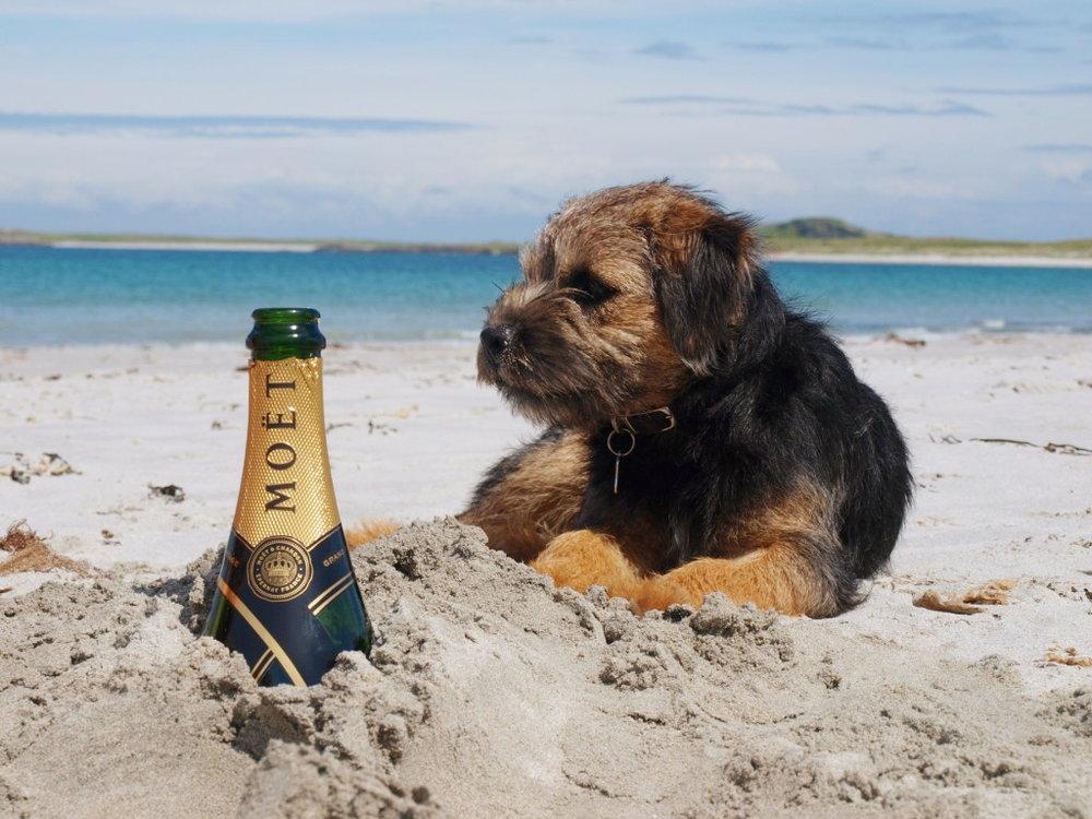 Taigeis & Champagne