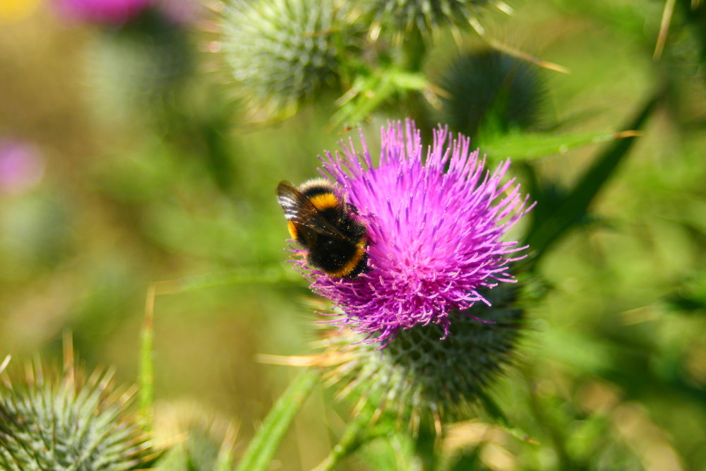 Bee & Thistle