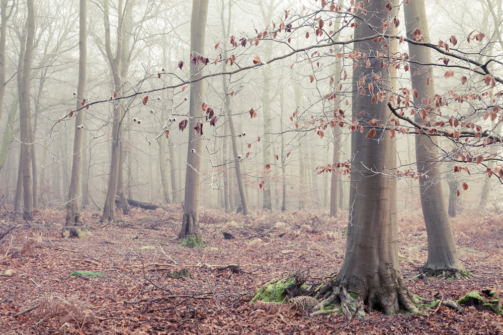 Winter at Thetford Forest, Norfolk