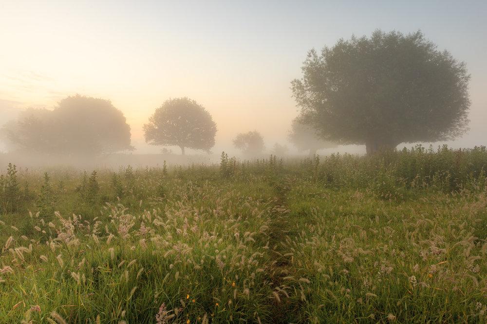 Misty meadows - Rover Stour, Suffolk