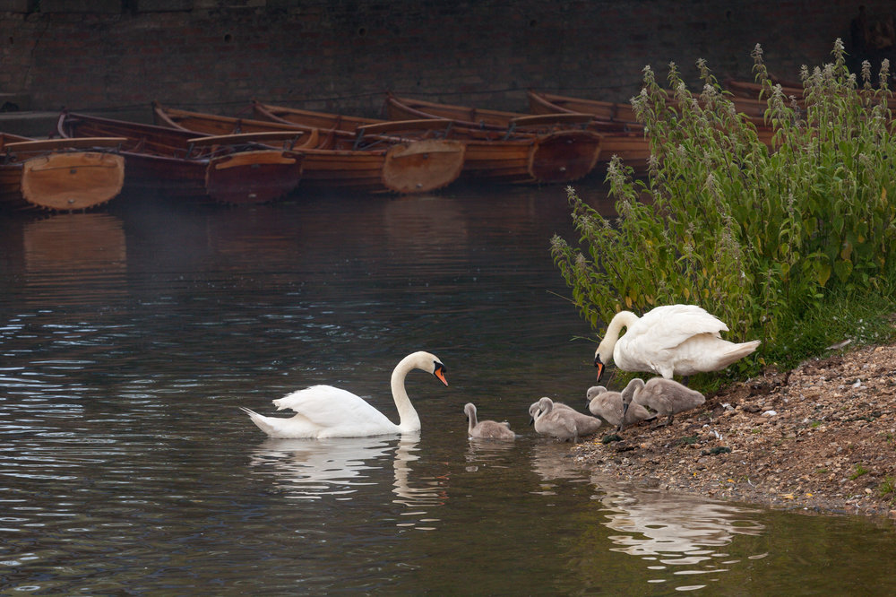 Family outing - Dedham, Essex