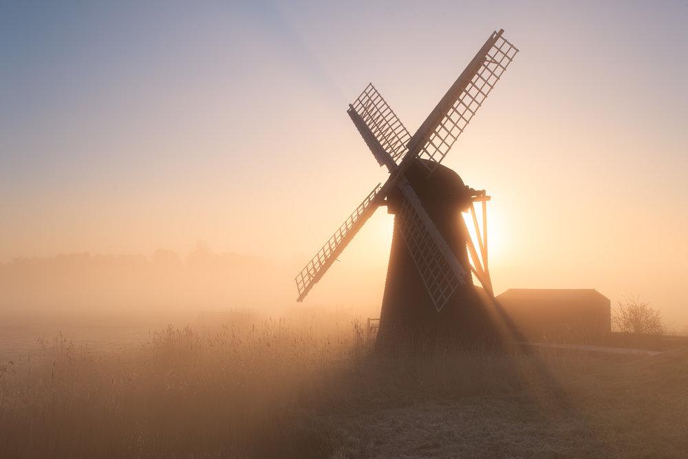 Backlit - Herringfleet, Suffolk