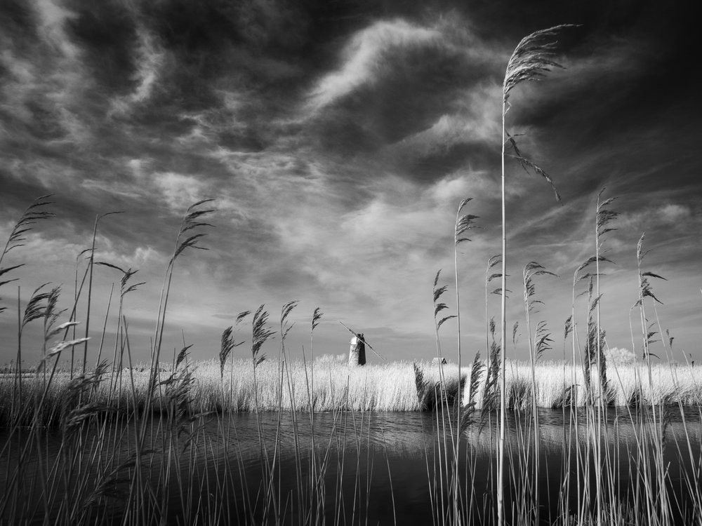 Between the reeds - Heigham Holmes, Norfolk