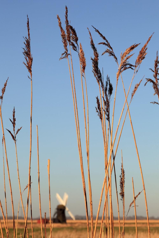 Across the marsh - Herringfleet, Suffolk