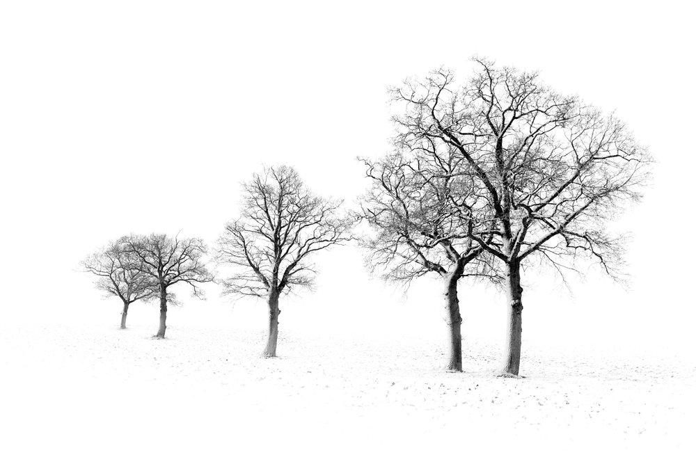 White & Black II - Stowmarket, Suffolk