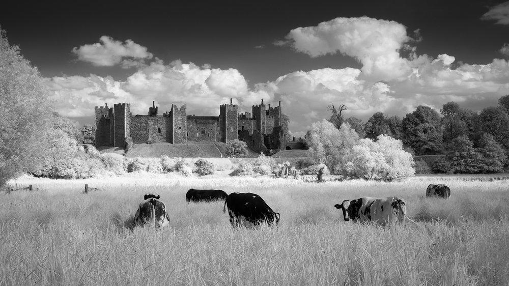 Castle with cattle - Framlingham, Suffolk