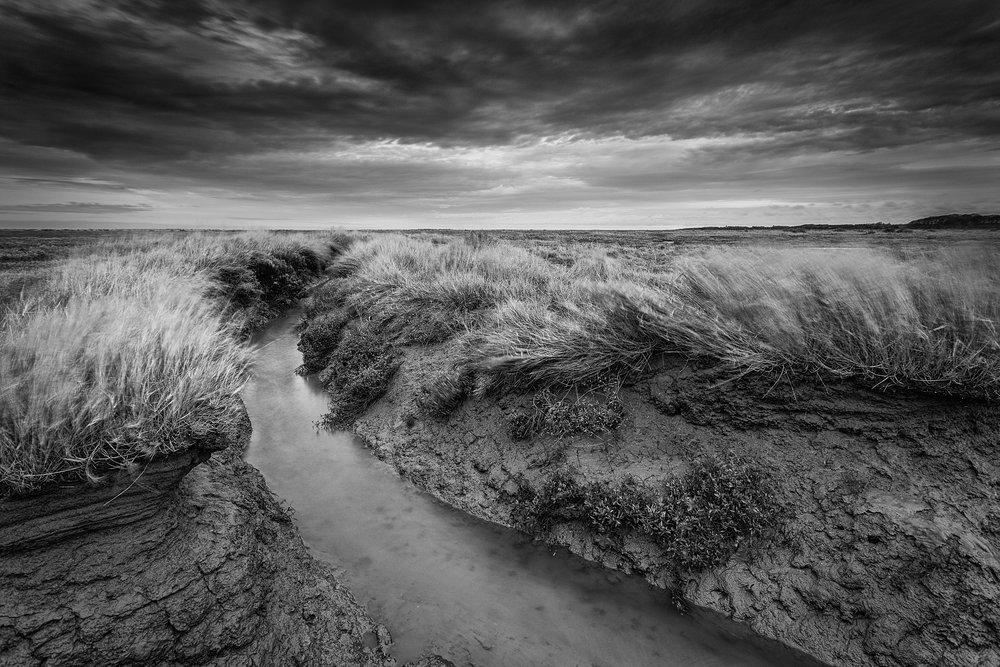 Windswept - Stiffkey, Norfolk