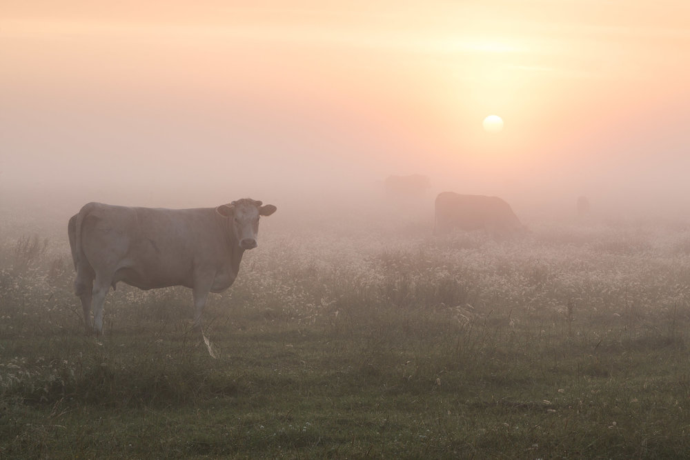 A misty start at Halvergate marshes, Norfolk