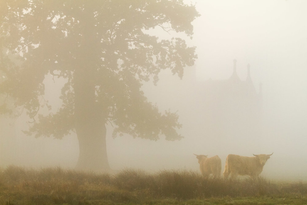 Helmingham in the mist - Helmingham Hall, Suffolk
