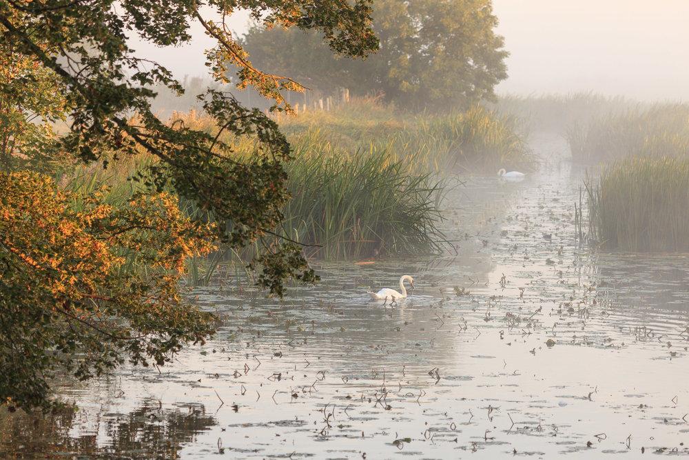 Water Meadows - Sudbury, Suffolk