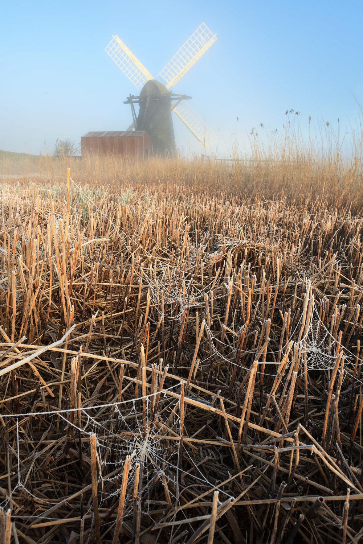 Bejewelled - Herringfleet, Suffolk