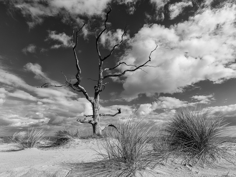 Trees on Covehithe beach