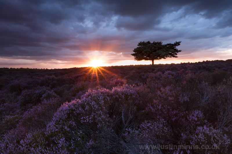 Suffolk Heather