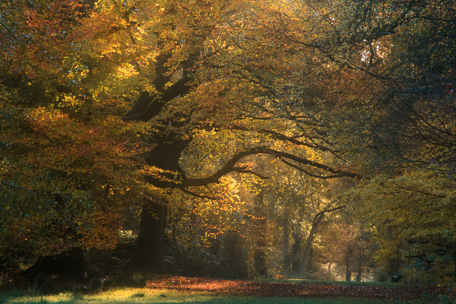 Ashridge Estate, Hertfordshire in autumn