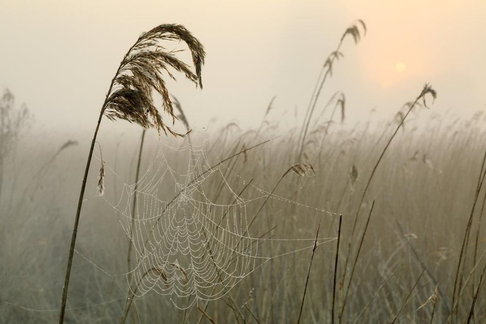 Dew point - Norfolk Broads