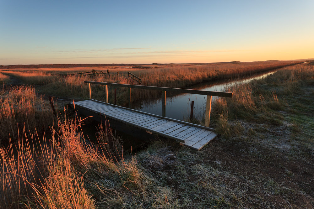 Winter dawn - Salthouse, Norfolk