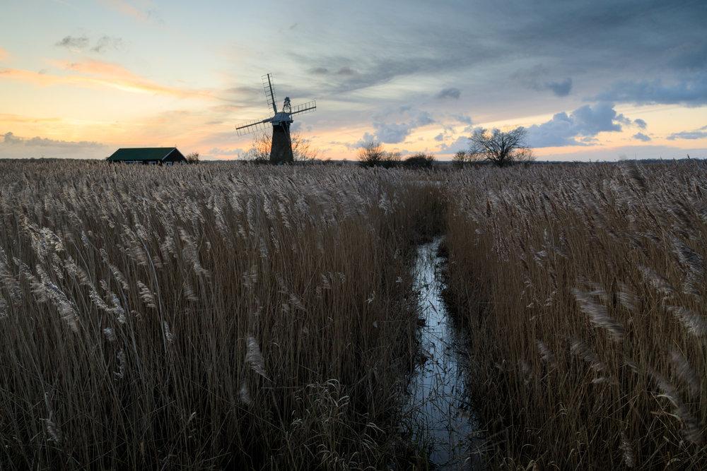 Whispering reedbeds - Thurne, Norfolk