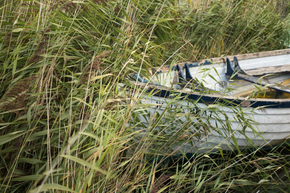In the reeds - Hickling, Norfolk