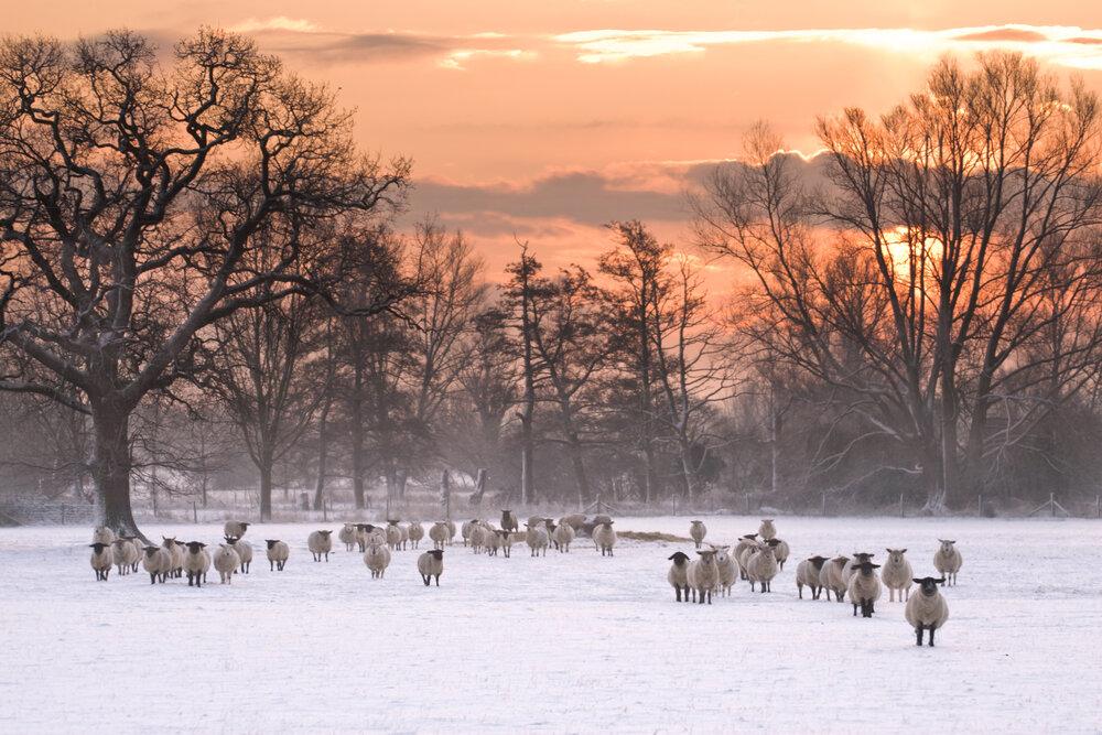 Winter glow - Stratford ST Mary, Suffolk