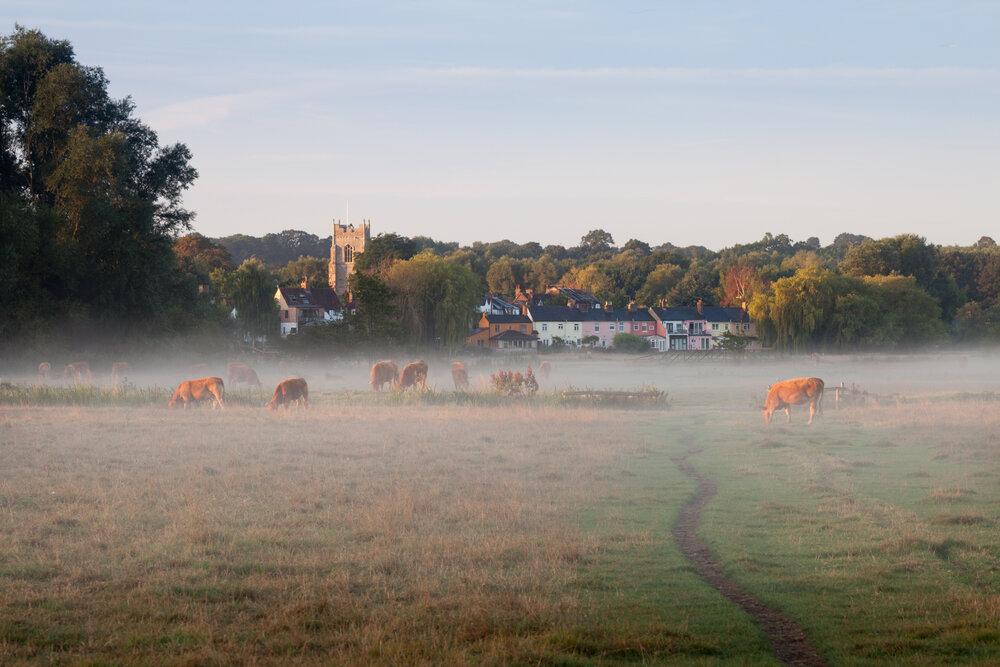 The water meadows - Sudbury, Suffolk