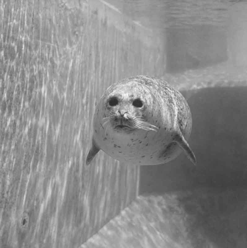 Per Maning, Seal, 1988-1993 © Per Maning / BONO