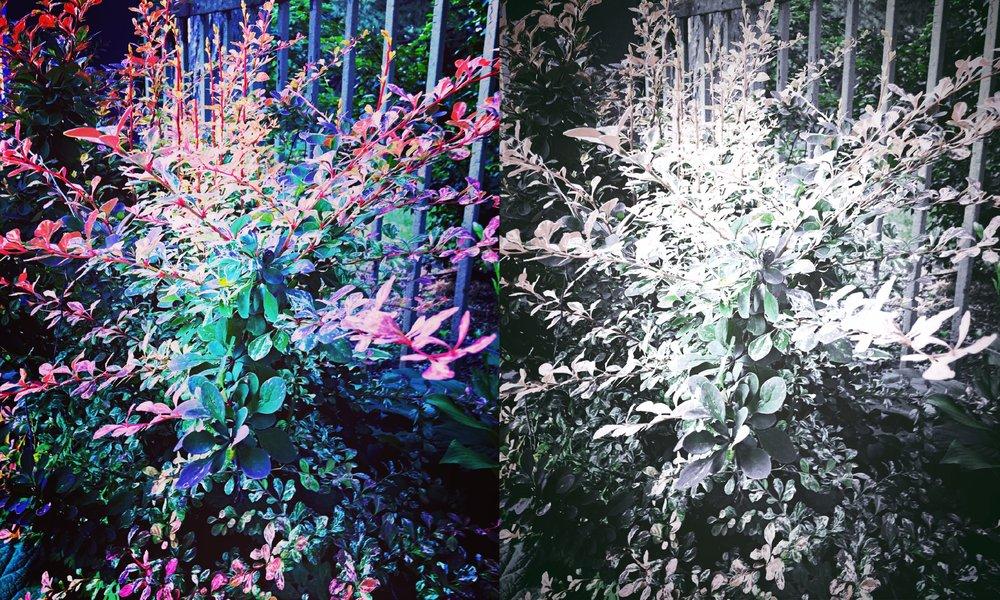 Collage_Fotoroo98.jpg