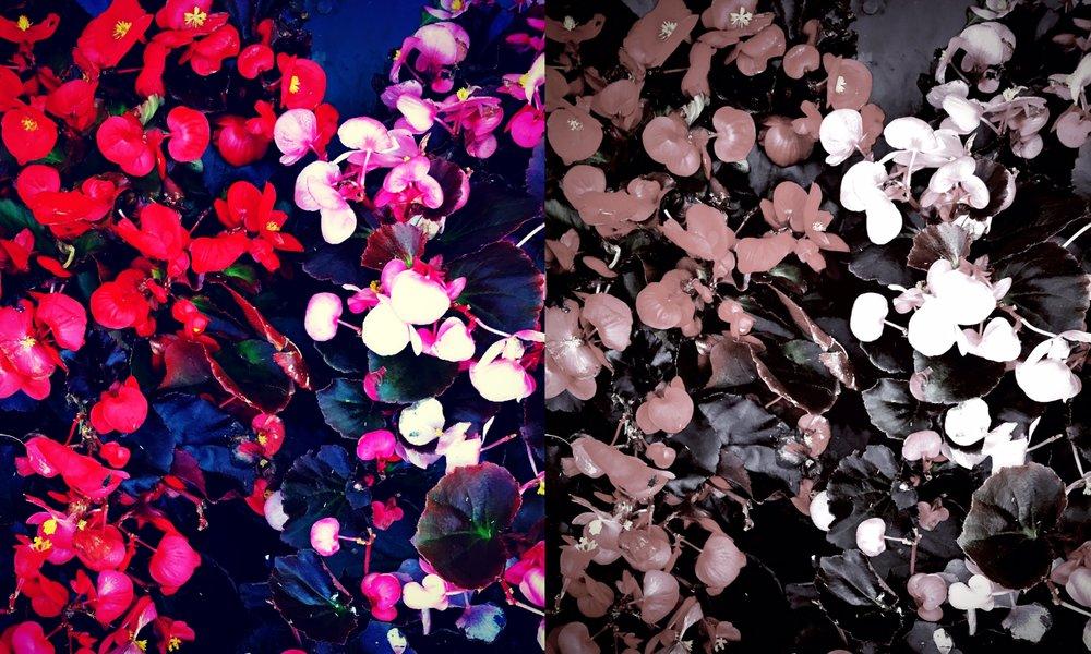 Collage_Fotor76g.jpg