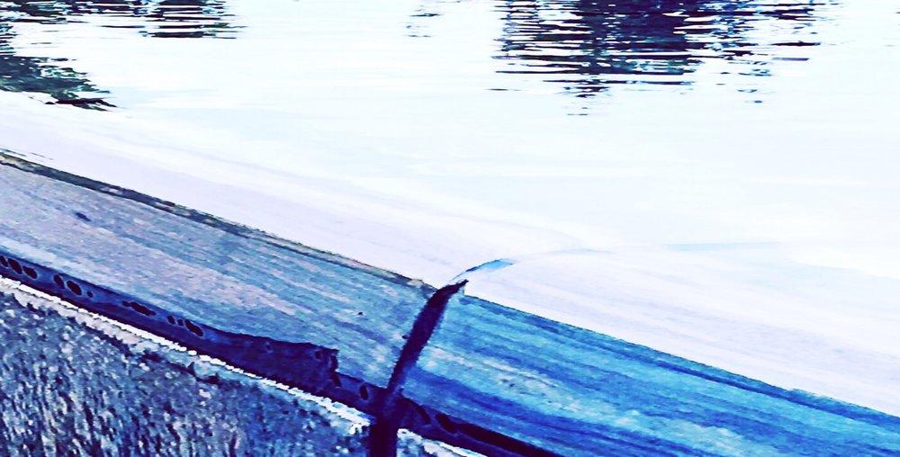 IMG_292_Fotor.jpg