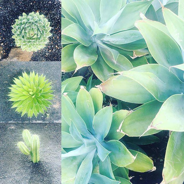Getting a little garden inspiration! #spanishfinca #fincaavedin #cactus #garden #funinthesun #spanishholidays