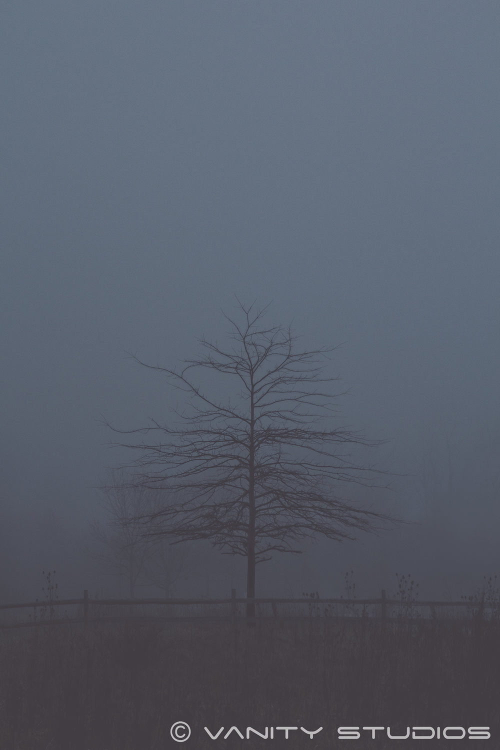 Lonely Tree WM.jpg