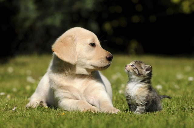 Cat and Dog Allergies