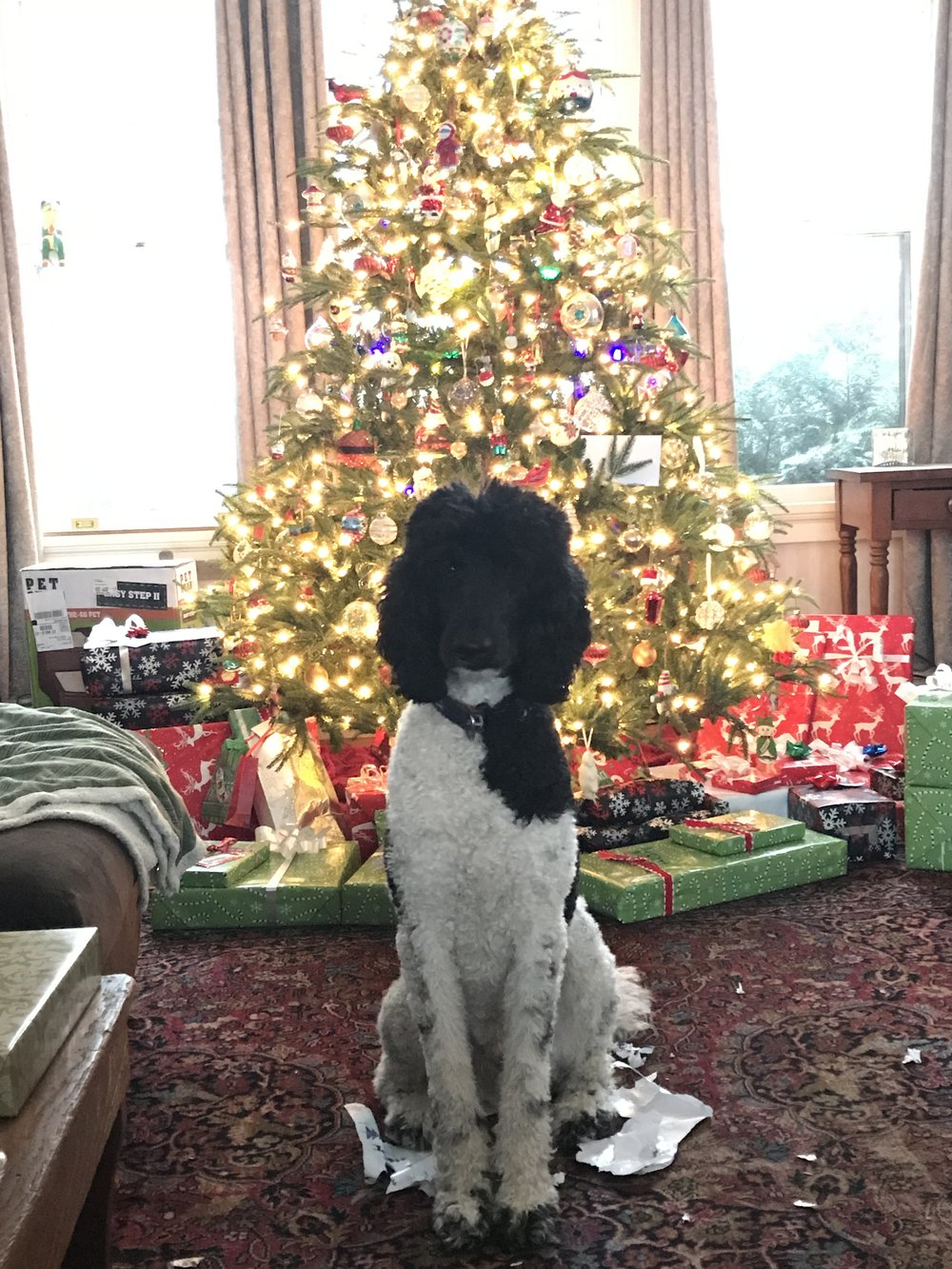 Iko on Christmas Morning