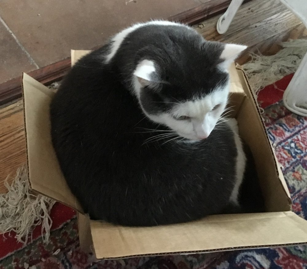 Same box......BUT Cassie cannot fit in it all the way.....but there's no stopping her trying to anyway.......if  her  sister did it....so will she !!