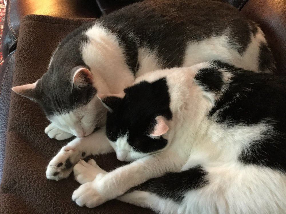 CATS Snuggle with heads together.jpeg
