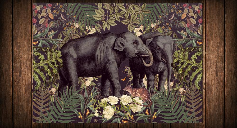 1-Elephants.jpg