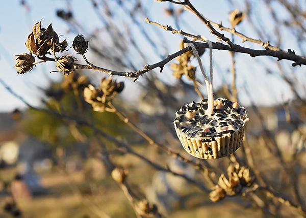 bird-food-3