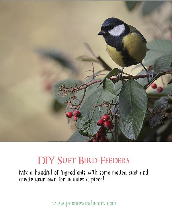 Bird-Suet-Pin2.jpg