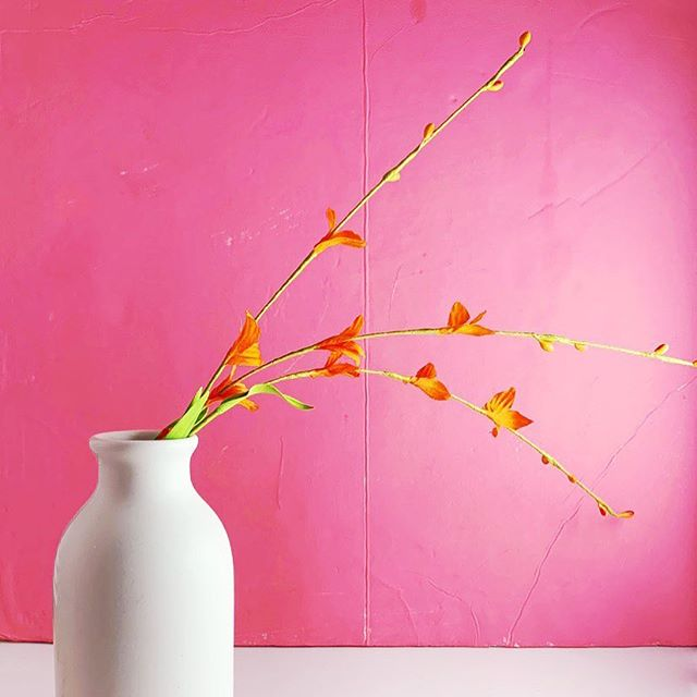 It's a bright sunny day ya'll!! #acolorstory #pink #almostspring #minimalism #stilllife #abmlifeiscolorful #simplethingsmadebeautiful