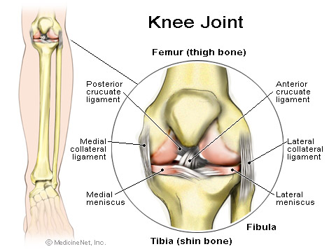 knee_joint_webmd